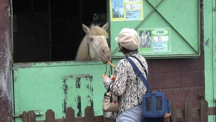 マザー牧場 前髪ぱっつんの馬