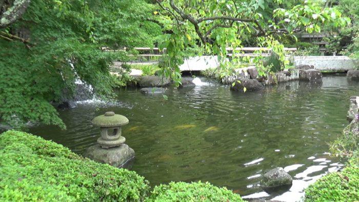 鎌倉長谷寺 鯉が泳ぐ池