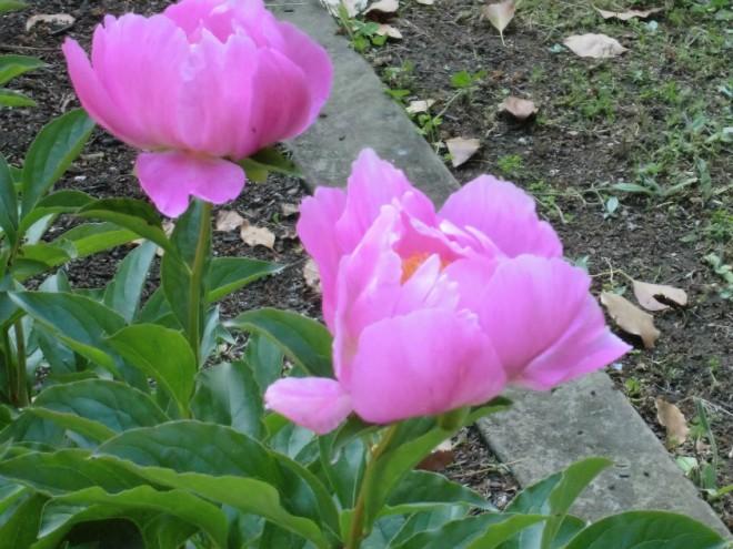 熊本城花壇