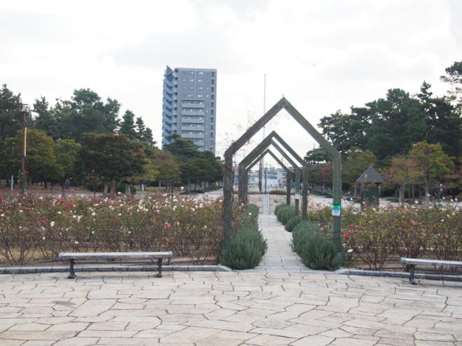 浜寺公園_薔薇