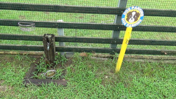 マザー牧場 ドッグランの水飲み場