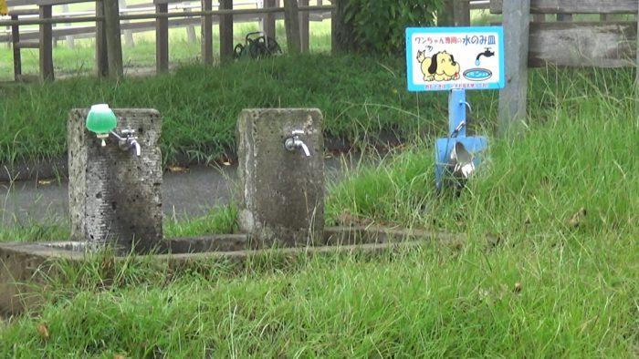 マザー牧場 犬の水飲み場