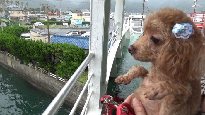 東京湾フェリー 出船前のマオ